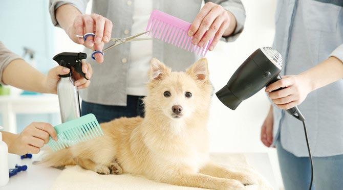 toiletteur-canin-metier