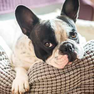 toiletteur-canin-specialisation-garde-animaux-domicile-mini